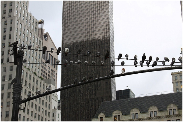 how-birds-can-affect-commercial-buildings